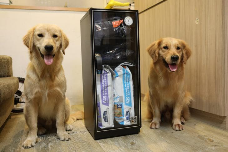 dogs and drybox